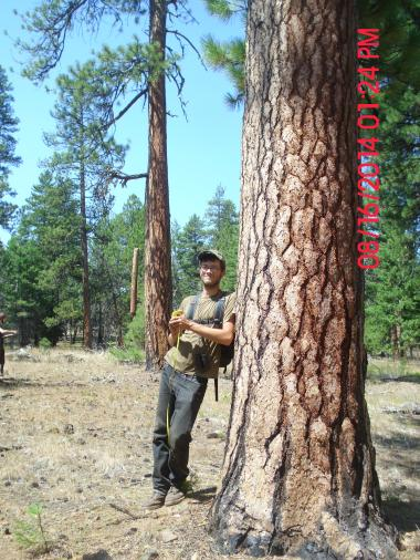 Sam with an old growth Ponderosa pine in the Gap sale