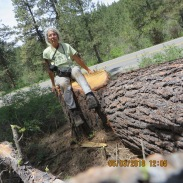 Karen with large stump and log