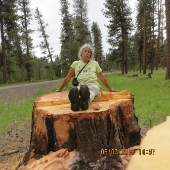 Karen Coulter on an old growth ponderosa stump